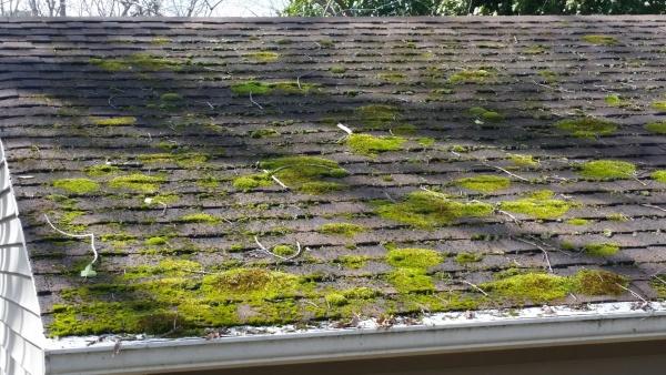 roof moss 3 a