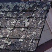 How To Remove Roof Moss